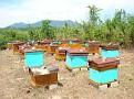 Honey Bee Hives in Mexico   Thank you Octavio Jimenez and your brother Isaac Jimenez in Mexico who tends to the bees  (14)