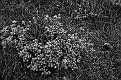 Цветы Карадага Flowers of Karadag DSC 4764 088 4 0 0 m
