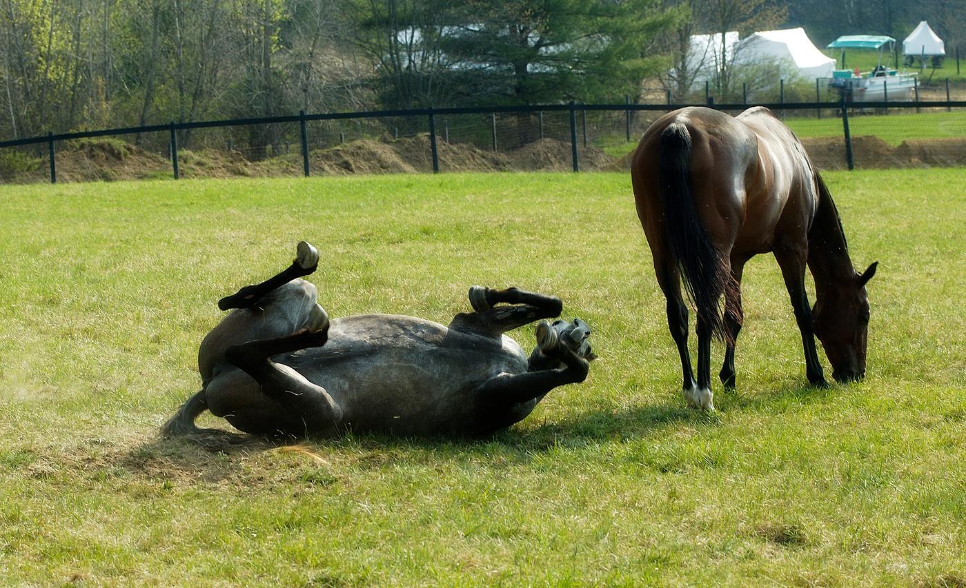 horse farm on Rt. 149, NY