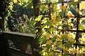Garden 2011 October 29 (2)