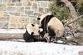 070216 Natl Zoo054