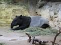 071208 Denver Zoo 0222