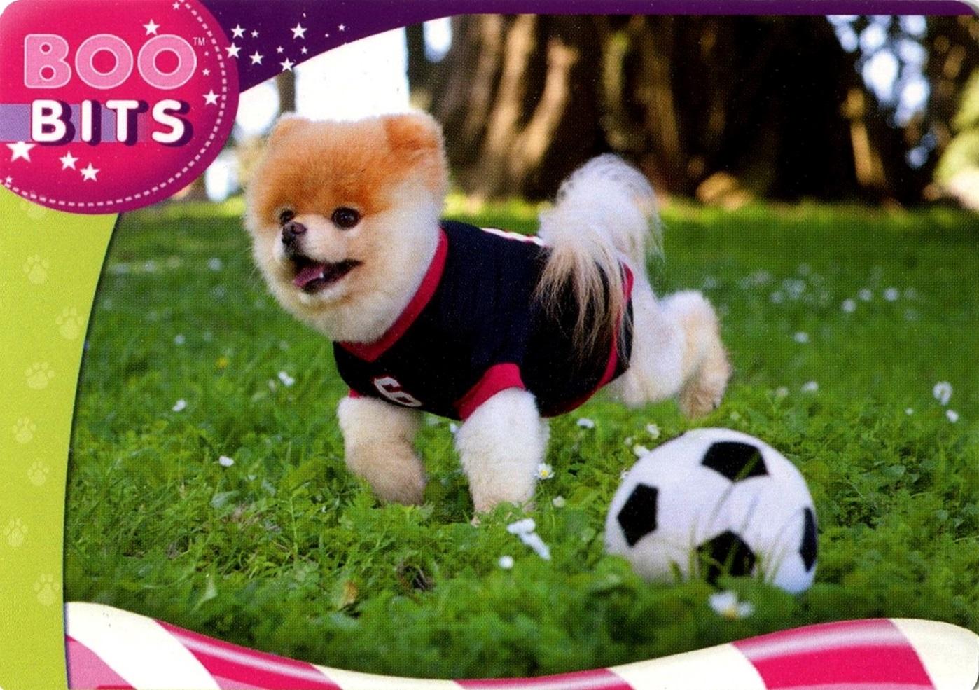 Boo The World's Cutest Dog #22 (1)