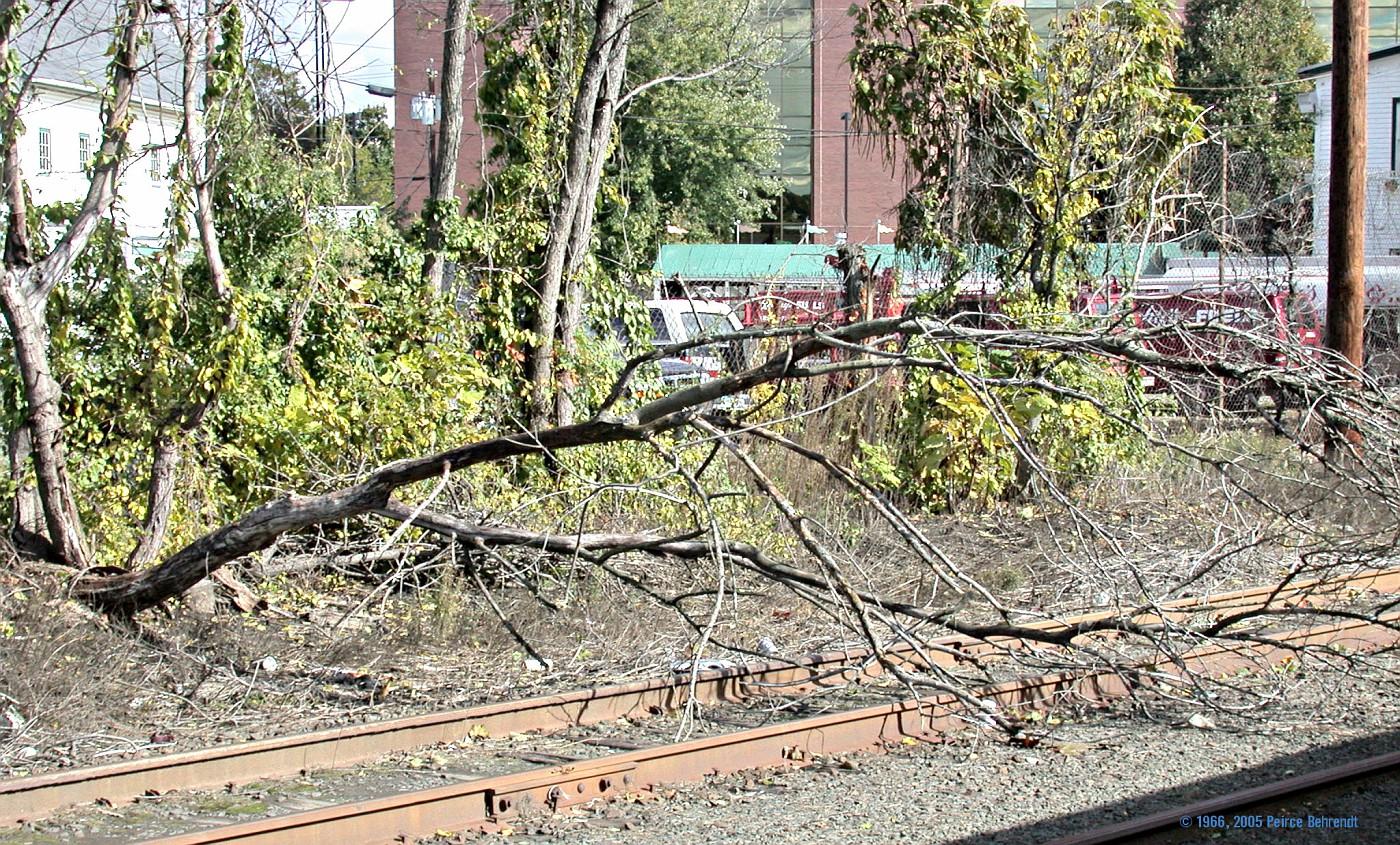 Tree on tracks 1