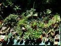 Garden table (5)