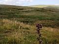 High moorland Cumbria, England