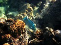 Mermaid Reef - near Marsh Harbour, Abaco, Bahamas