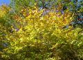 3563-Autumn-colours