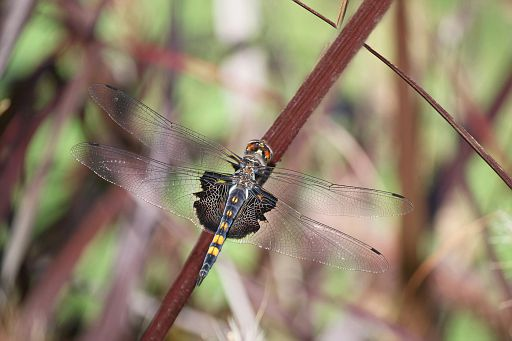 Black Saddlebags 2016 #11