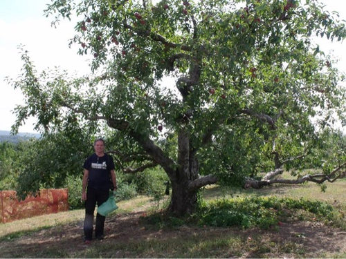 Kevin & I spend a day of collecting apples & pears