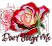 1Don't Forget Me-beautyrose10-MC