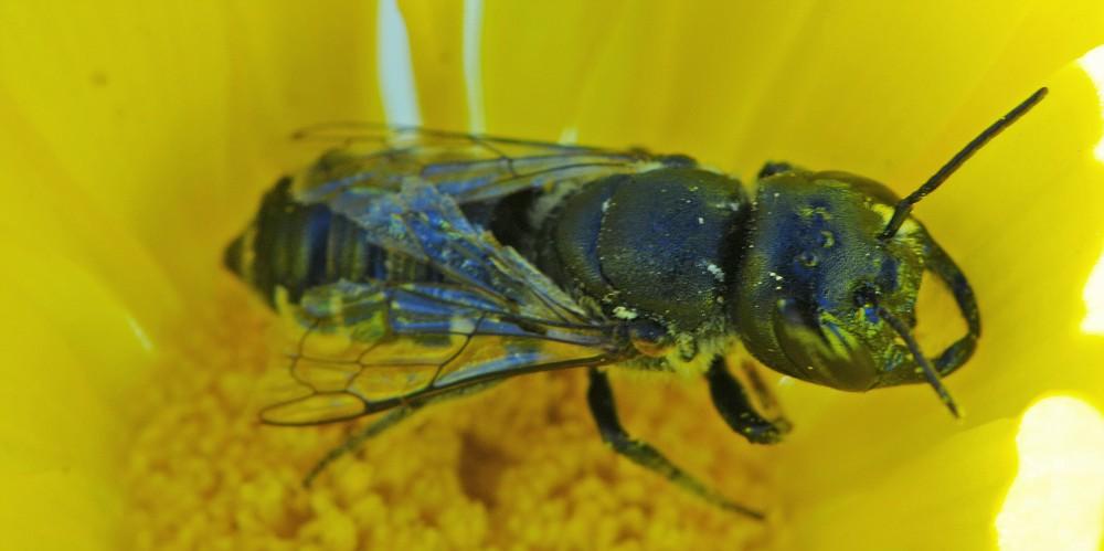 Unidentified Hymenoptera