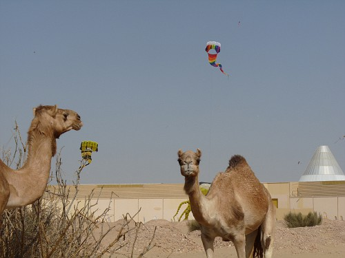 Kites and camels.
