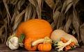 Autumn Pumpkins and Gourds