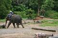 Mae Taeng Elephant Park Show (112)